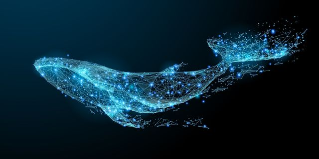 allarme cryptocurrencies whale